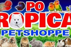 Po Tropical Petshopppe